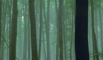 Amiről a fák suttognak – filmajánló