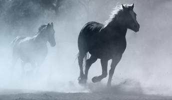 Száraz Miklós György: Lovak a ködben – könyvajánló