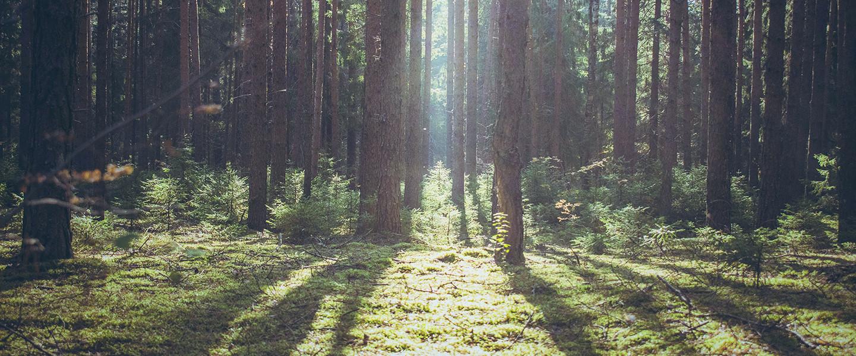 Peter Wohlleben: A fák titkos élete – könyvajánló