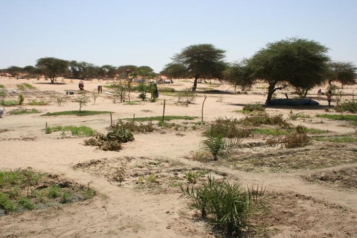 -Mauritániai oázisgazdaság