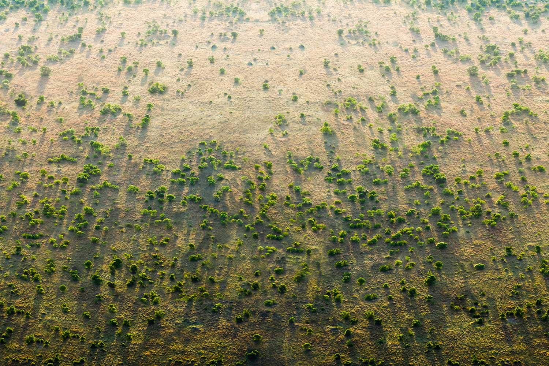 The Great Green Wall-A nagy zöld sivatag - 8000 km hosszan cserjéseket szeretnének létrehozni a sivatagban
