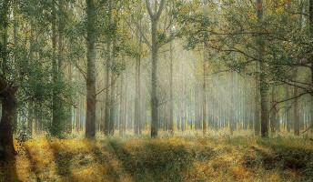 A zöld jövőnek teret kell adni