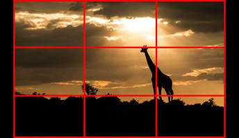A felharmadolt zsiráf – Mi és a fotós tanfolyam