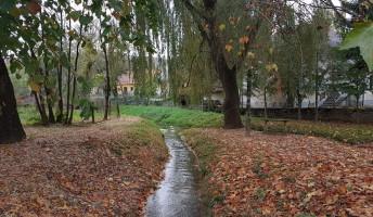 Rónai-Balázs Zoltán: Ősz a Szenes Hanna parkban