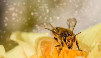 Terítéken a méhecskék