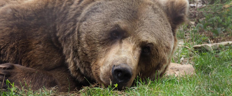 Mi és a fotós tanfolyam – A szembevakuzott medve meg a sárga ház