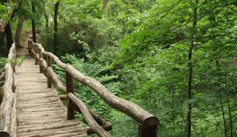Pest környéki túrák: Jági tanösvény