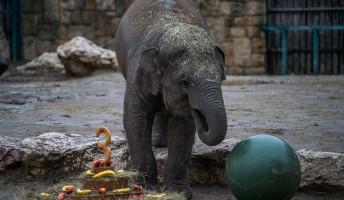 Online állatkert – fogadj örökbe vadállatot!