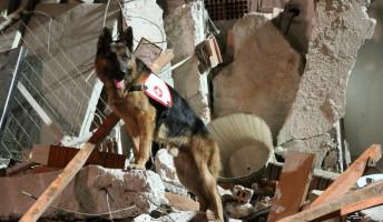 Szinte minden kutyából lehet életmentő. A tiedből is!